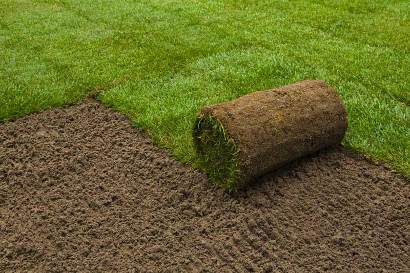 pelouse en rouleau